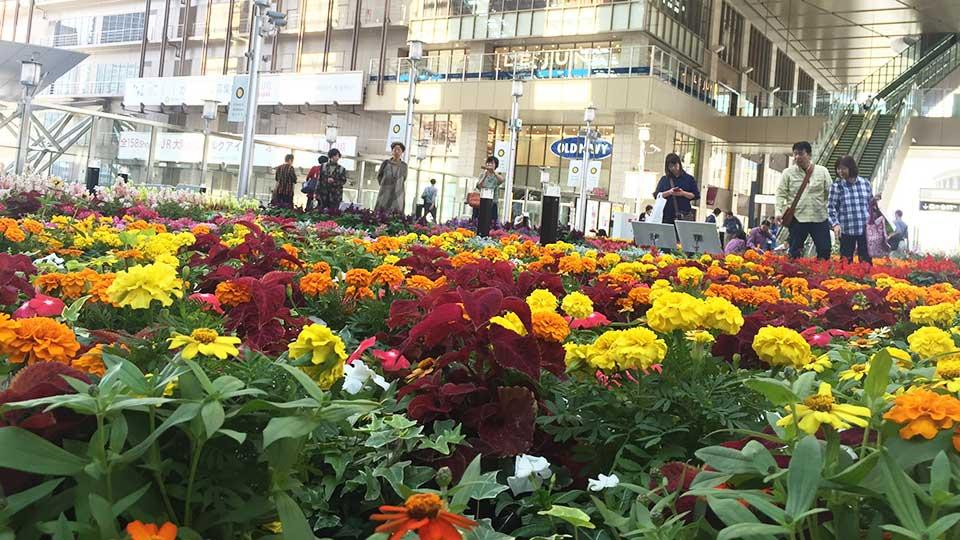 大阪ステーションシティお花畑