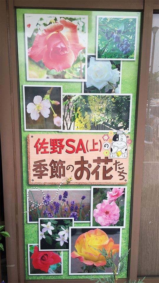 季節のお花たち_栃木県佐野サービスエリアSA