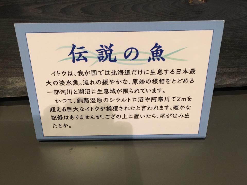 釧路市湿原展望台_伝説の魚