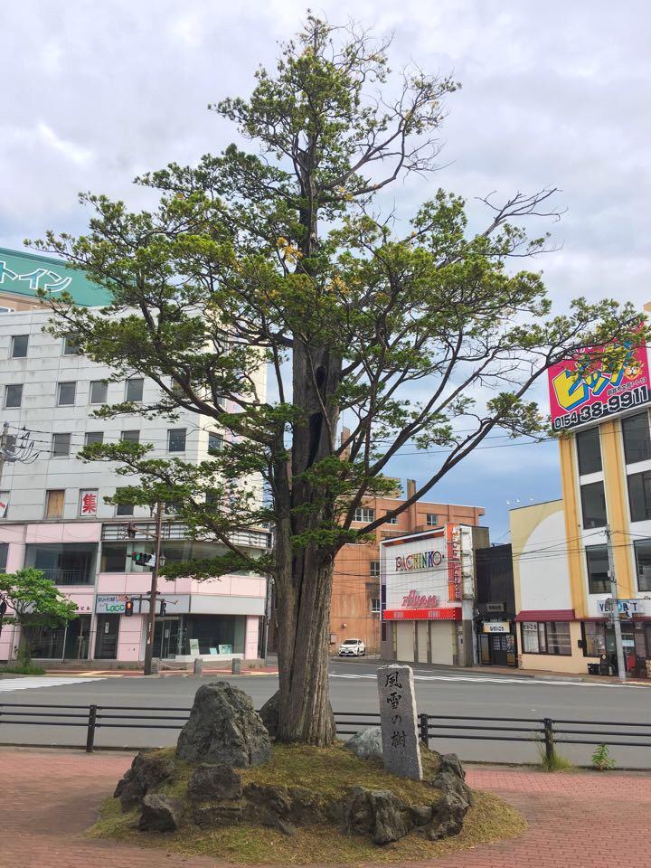 釧路_風雪の樹