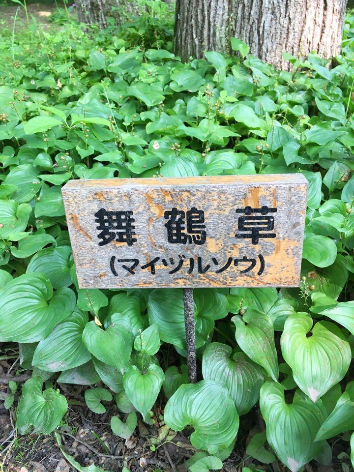 六花の森_舞鶴草