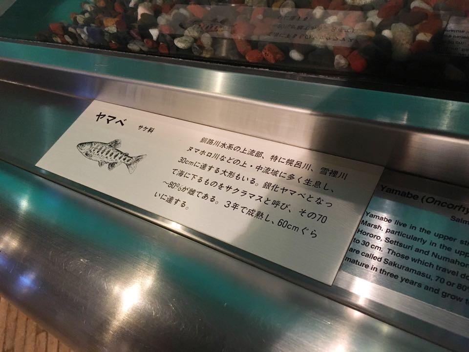 釧路市湿原展望台_ヤマベの紹介